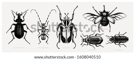 vector collection of high