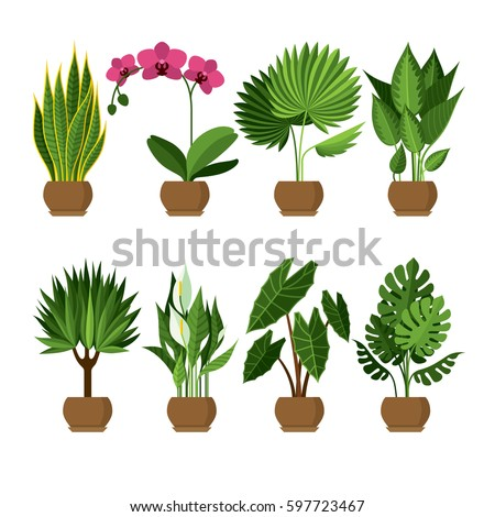 vector collection of indoor