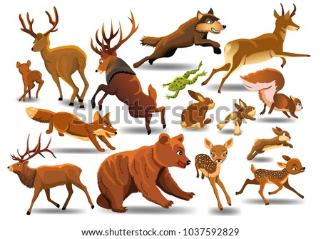 vector collection of wild