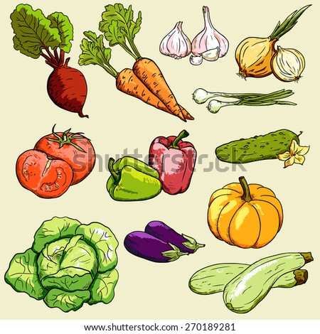 vector collection vegetables / vegetables in color #270189281