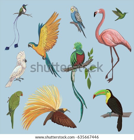 vector color set of beautiful