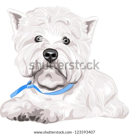 Vector color sketch closeup portrait serious dog West Highland White Terrier breed with blue collar
