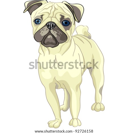 vector color sketch of the dog fawn pug breed