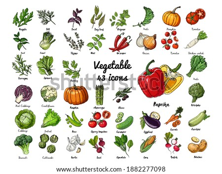 Vector colored food icons Vegetables. Farm products, herbs and spices, salad, pumpkin, tomatoes, peppers