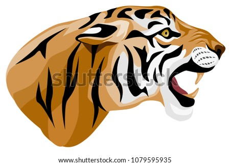 vector colored illustration