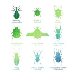 Vector colored set of bugs and beetles in low poly style. Isolated illustration on white background. Firebug, ladybug, bug, dung-beetle, rose beetle, stag beetle, firefly, weevil, rhinoceros beetle