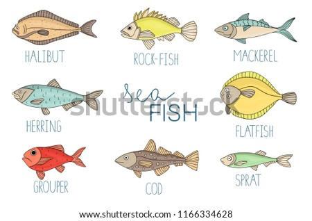 Vector  colored set of fish isolated on white background. Colorful collection of halibut, rock-fish, mackerel, herring, flatfish, sprat, grouper, cod. Underwater illustration