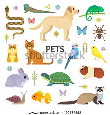 Shutterstock Vector colorful collection of domestic mammals, rodents, insects, birds, reptiles, including dog, cat, rabbit, tortoise, ferret, parrot, snake, guinea pig, chameleon, hamster, tarantula and a canary.