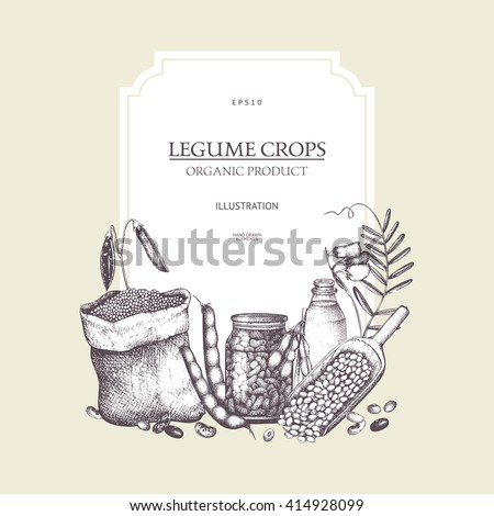 Vector colorful design with ink hand drawn legume crops sketches. Vintage illustration with legumes products. Farm fresh and organic food template.