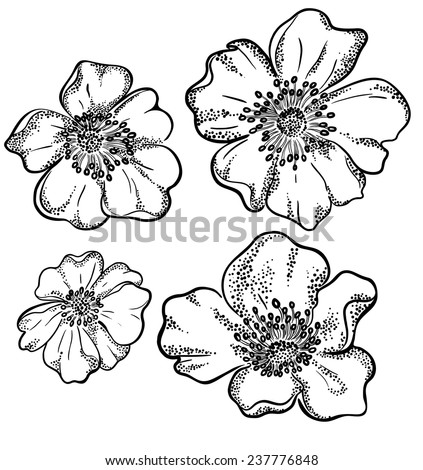 vector contour flowers