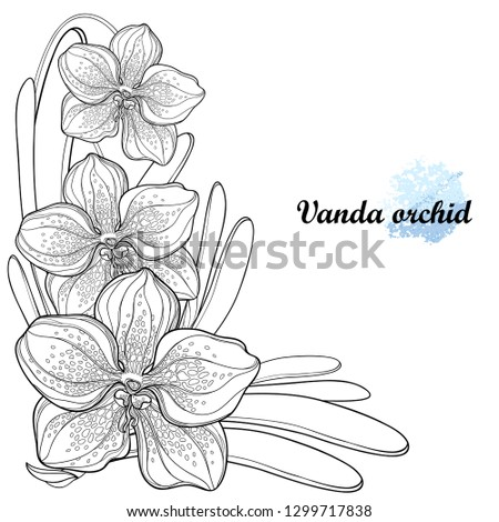Vector corner bouquet with outline Vanda orchid flower and leaf in black isolated on white background. Epiphyte tropical flower. Exotic ornate Vanda in contour for summer design or coloring book.