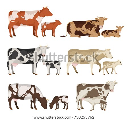 Vector cow and calf collection isolated on white
