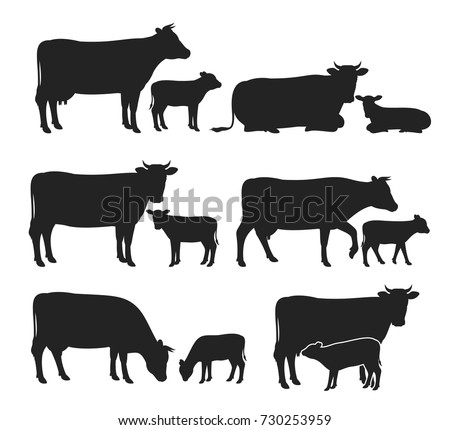 Vector cow and calf silhouettes isolated on white