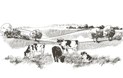 Vector cows on the field. Meadow, alkali, lye, grass, hills landscape. Flock of calves, farm animals with countryside pastures panorama. sketch illustration