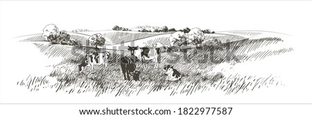 Vector cows on the field. Meadow, alkali, lye, grass, hills landscape. Flock of calves, farm animals with countryside pastures panorama. sketch illustration Сток-фото ©