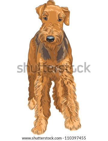 vector cute puppy dog Airedale Terrier breed