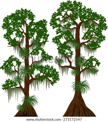 vector cypress trees with Spanish moss