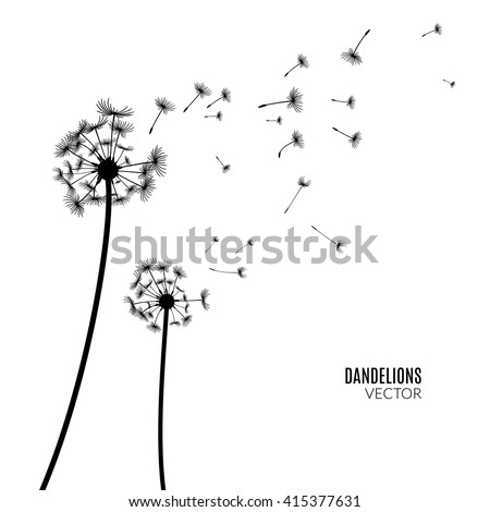 Vector Dandelion blowing silhouette. Flying blow dandelion buds black outdoor decoration on white.