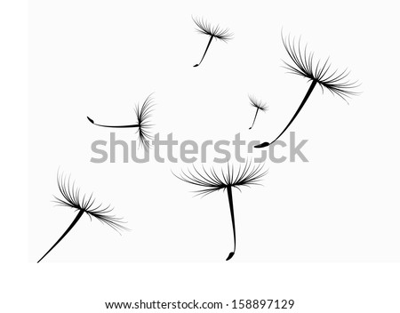 vector dandelion seeds blown in