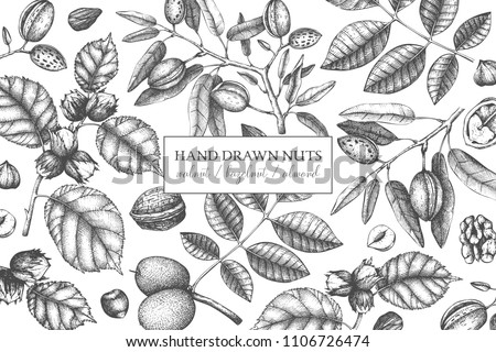 Vector design with hand drawn nuts. Vintage hazelnut, walnut, almond illustrations. Engraved style organic food background. Menu, branding, packing, cards template. #1106726474