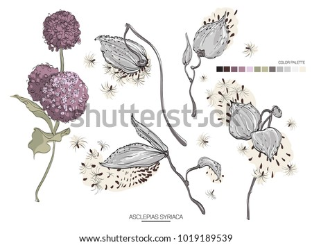 Vector designer elements set collection of green asclepias syriaca art foliage natural leaves herb. Decorative beauty elegant illustration for design.