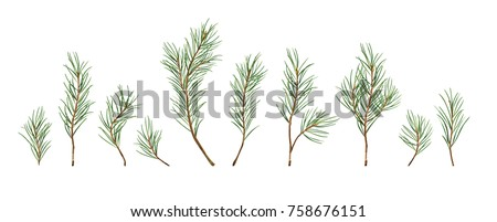 Vector designer elements set collection of green natural forest pine christmas tree   needles branches greenery hand drawn in watercolor style. Decorative winter seasonal editable, isolated art bundle