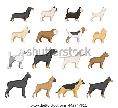 vector dog breed collection