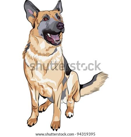 vector dog german shepherd