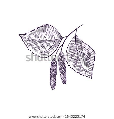 vector drawing branch of birch