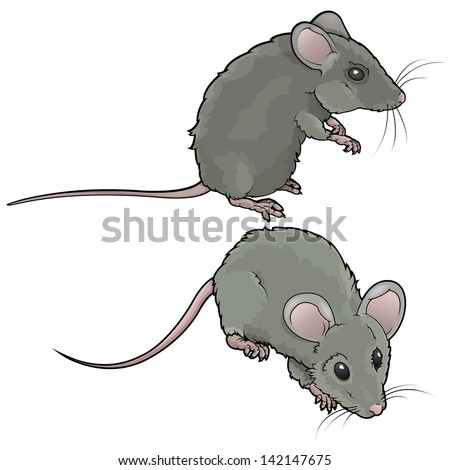 vector drawing mice vector