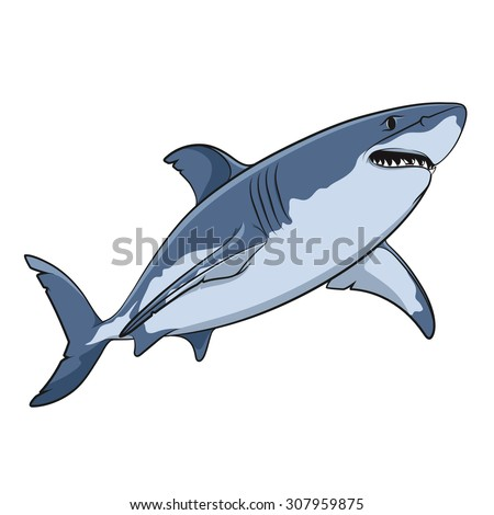vector drawing of a great white