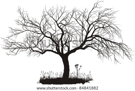 vector drawing of an old apple tree