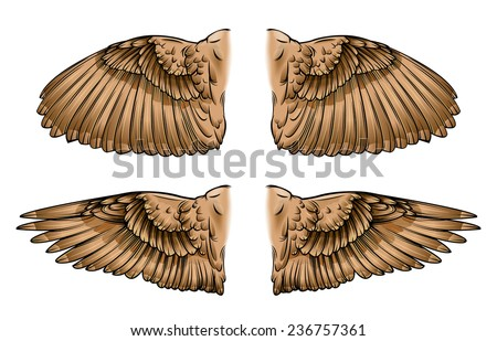 Bird With Open Wings Drawing Vector Drawing of / Bird Wings