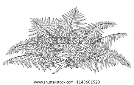 Vector drawing of outline fossil forest plant Fern with fronds in black isolated on white background. Contour Fern bush with ornate leaf for summer design or floral coloring book.
