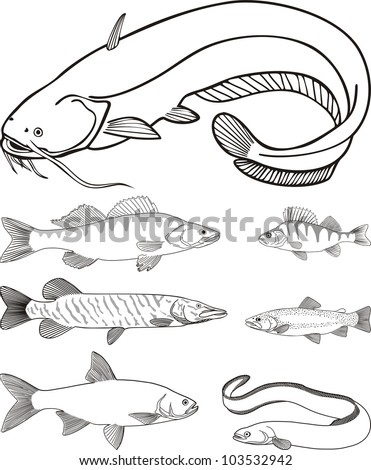electric eel coloring pages  electric  free engine image