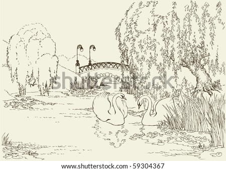 Vector drawing. Two swans in the park lake under the willows and surrounded by lilies