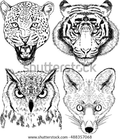 vector drawings of wild animal