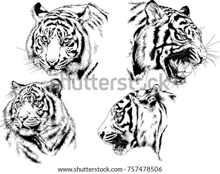 vector drawings snarling jaws