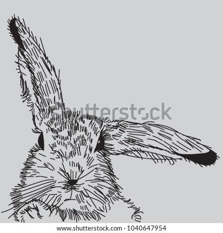 Vector Easter rabbit hand drawn