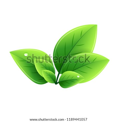 Vector eco green leaves. Abstract ecology design element