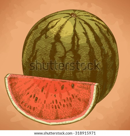 Vector engraving illustration of highly detailed hand drawn watermelon and slice in retro style