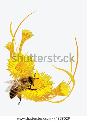 Vector EPS10/ A bee on a flower coltsfoot