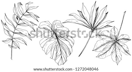 Vector Exotic tropical hawaiian summer. Palm beach tree jungle botanical leaves. Black and white engraved ink art. Leaf plant botanical garden floral foliage. Isolated leaf illustration element.
