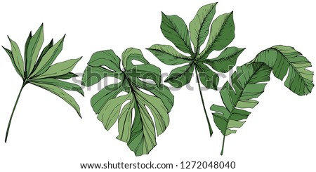 Vector Exotic tropical hawaiian summer. Palm beach tree jungle botanical leaves. Green engraved ink art. Leaf plant botanical garden floral foliage. Isolated leaf illustration element.