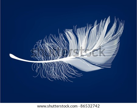 vector feather. eps 10 - stock vector