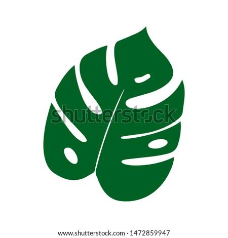 Vector flat illustration of tropical leaf of Monstera. Vector Monstera
