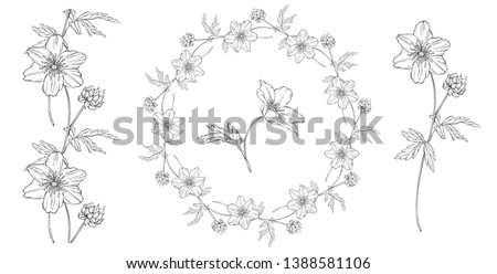 vector floral black and white composition set with anemone flowers #1388581106