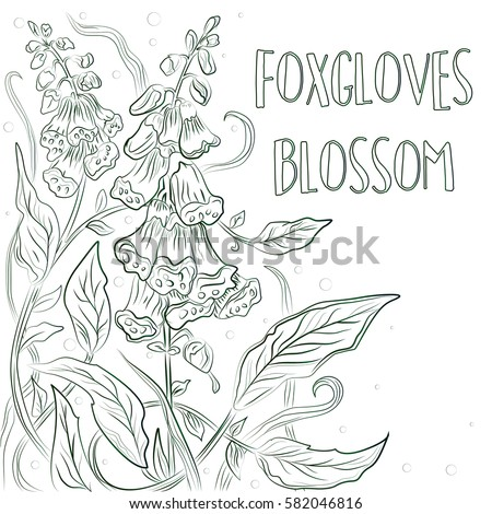 vector floral blossom beautiful