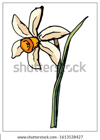 vector floral illustration with