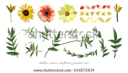Vector flower elements set collection of Various Flowers Leaves Dahlia Cosmos Daisy Sunflower, petals, Jasmine vine Eucalyptus branch leaf. Yellow Orange Green watercolor garden beautiful wildflowers